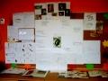 projekt Jaszczurka (3)